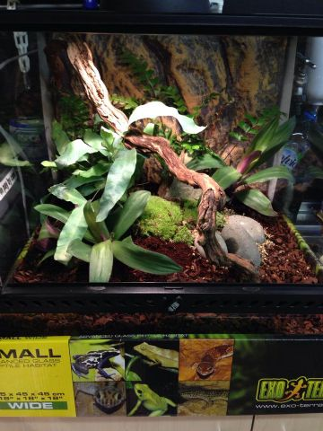 Reptilia Live Planted Set Up - Medium